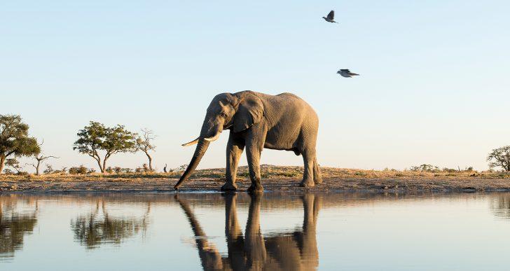 Top 5 Honeymoon Adventure Locations in Botswana